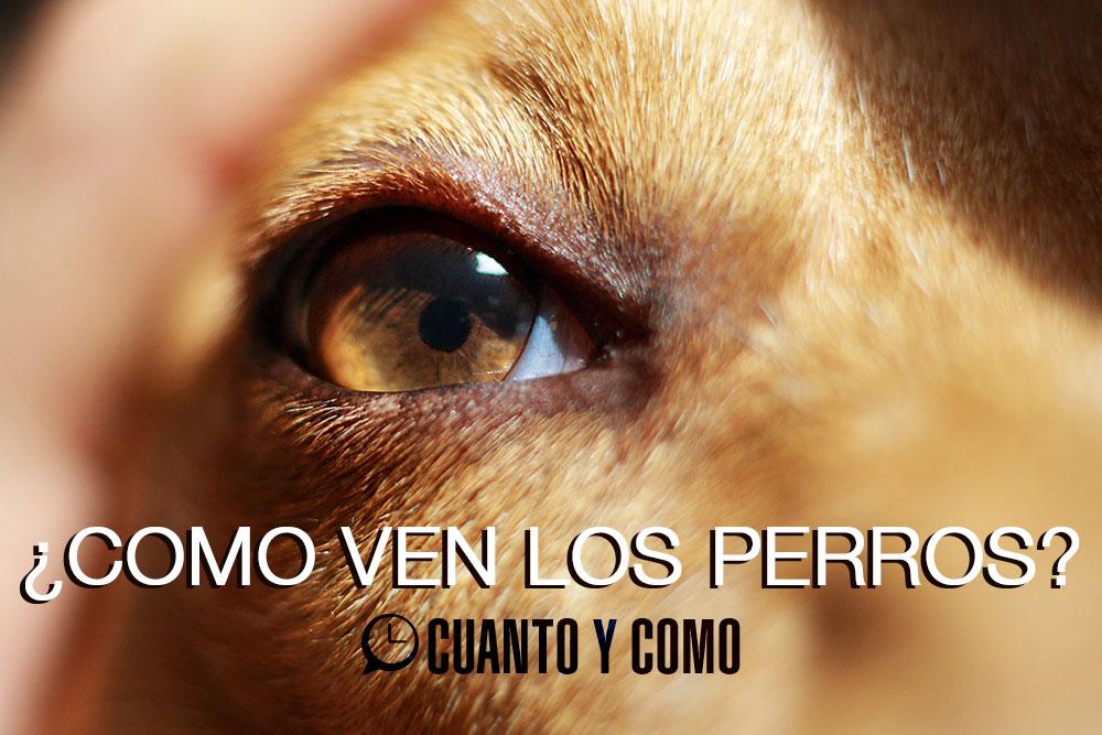 vision de los perros