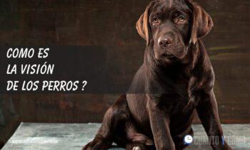 Como es la visión de los perros?