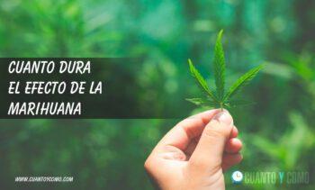 Cuanto dura el efecto de la marihuana